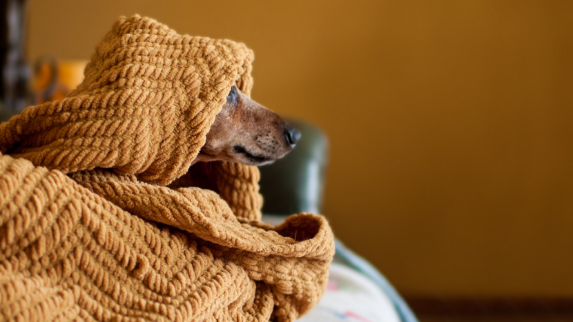what to do for dogs scared of thunder and storms